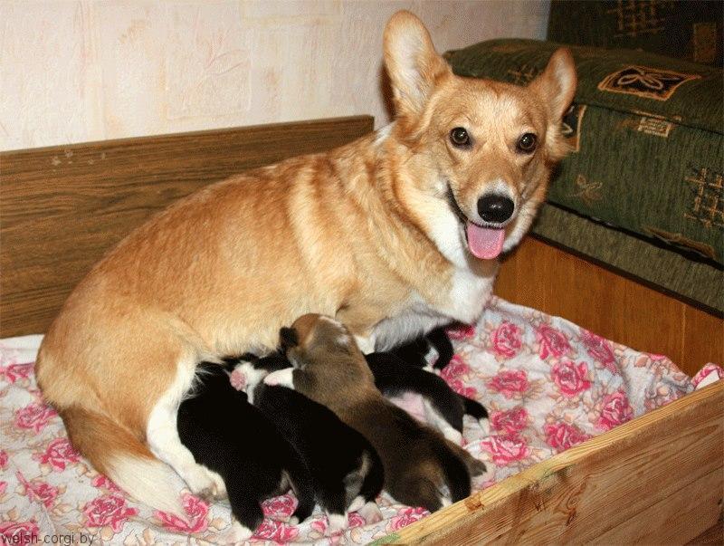 Феня и щенки